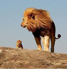 Everything The Light Touches Is Our Kingdom Meme Look Simba Everything The Light Touches Is Our Kingdom