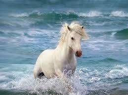 Gepind Van Kepguru Horses Paarden