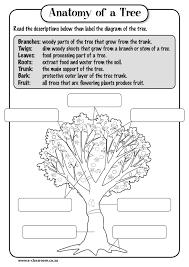 Anatomy of a TreeRead the descriptions below then label the ...