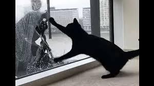 Video Des Tages Dieser Fensterputzer Ist Der Beste Freund Einer