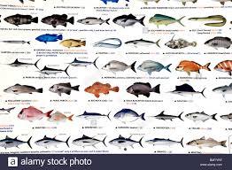 Fish Types Stock Photos Fish Types Stock Images Alamy