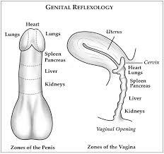 Average depth penetration sex