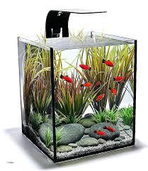 office desk fish tank. Fish For The Office Desks Tank Desk Elegant Modern Cool Small Tanks Fishbowl Space