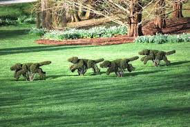 the pack of hounds topiaries is one of ladew topiary gardens most well known feature