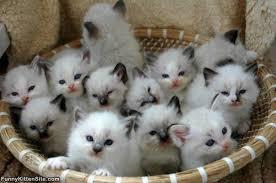 """Résultat de recherche d'images pour """"les petits chats"""""""