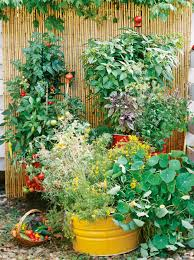 growing tomatoes and other vegetables