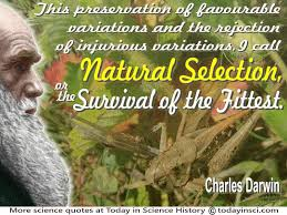 charles darwin quote this i call natural selection or the  charles darwin quote this i call natural selection or survival of the fittest