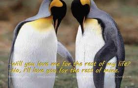 • the world's catalog of ideas. Love Quotes About Penguins Penguin Love Quotes Image Search Results Cute Love Quotes Penguin Love Quotes Cute Love