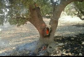 Afbeeldingsresultaat voor عکسهای پیوند درخت