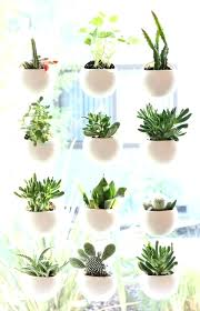 small office plant. Small Indoor Plants Best Ideas On Flowering House And . Office Plant