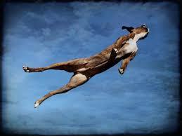 """""""Σκυλιά τολμηρά , όπου πετάνε στον αέρα...'"""