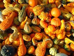 Gourd Identification Chart Gourds Types Of Gourds Growing Gourds Curing Gourds Old