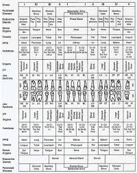 Tooth Organ Meridian Chart Meridian Tooth Charts Signify Poor Judgment