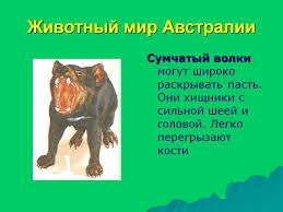 Животный мир Австралии Презентация  Животный мир Австралии