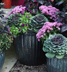 Fall Ensemble  Container Gardening Gardens And Fall ContainersContainer Garden Ideas For Fall