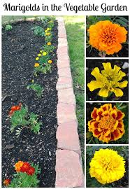 best garden vegetables. 200 Best Garden Vegetables \u0026 Fruits Images On Pinterest | Growing Vegetables, Potager And