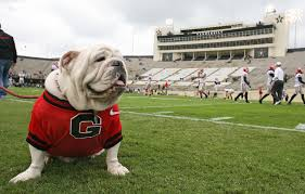 dress codes for female teachers their clothing seems to be more why is this dog smiling another top 10 list another accolade for uga