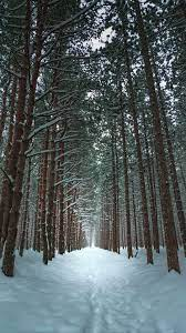 Winter Forest Wallpapers and HD ...