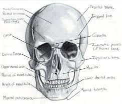 Small Picture 66 best Skulls and skeletons images on Pinterest Skulls Bones