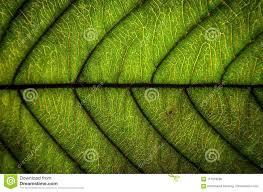 Groene Bladerentextuur En Bladvezel Behang Door Detail Van Gree