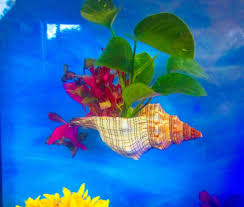 Betta Art Decorative Fish Bowl AQUARIUM DECOR aftcra 37