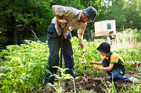 Organic Gardening- What Does Organic Mean?