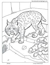 Mammals Coloring Educational Fun Kids Coloring Pages And Preschool