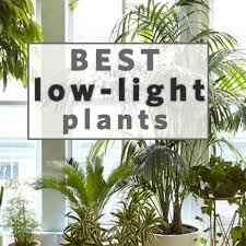 best of 8 houseplants that can survive urban apartments of best of 8 houseplants that