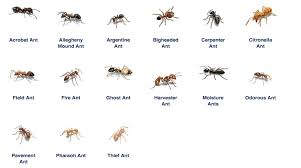 have an ant problem in thailand here s what worked for me
