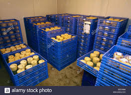 Image result for cheese cold storage