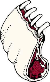 prime rib dinner clip art. Beautiful Prime Lamb Ribs Meat Raw Lamb Chops Loin In Prime Rib Dinner Clip Art T