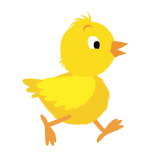 cute baby chicken clipart. Perfect Baby Baby Chicken Photospetsbunchcom  Petsbunchcom With Cute Clipart