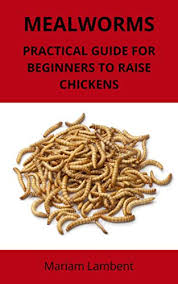 Mealworm Size Chart Mealworms Practical Guide For Beginners To Raise Chickens See More