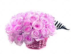 pink rose flower rose hd wallpaper