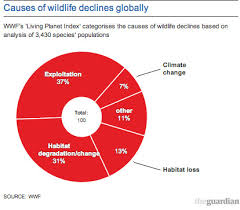 Pie Chart Of Endangered Species In India New Earth Has Lost