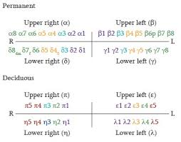 Sarjeevs Supernumerary Tooth Notation System A Universally