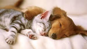 котенок и щенок спят вместе