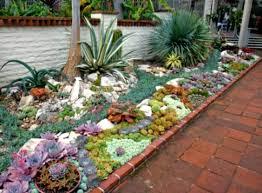 succulent rock garden design