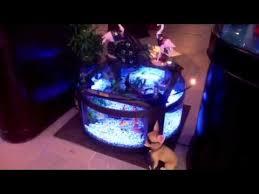 amazing round table aquarium