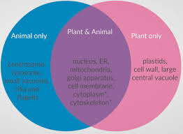 Venn Diagram Plants Differences And Similarities Between Plant And Animal Cells Withcarbon