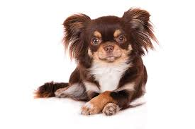 New options for managing pet allergies | Southwest Journal