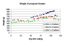 Breeding Chinchillas Mating And Pregnancy Infolific