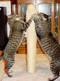 Feeding Your Cat Know The Basics Of Feline Nutrition