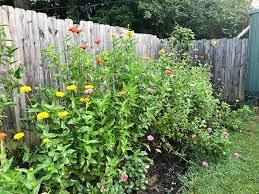 cut flower garden for beginners