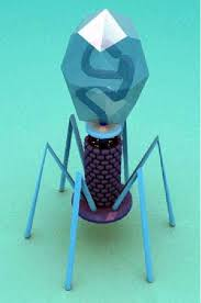 Реферат на тему вирусы Реферат ΙΙ Особенности строения и размножения вирусов