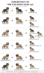 Pitbull Age Chart Curious Types Of Bullying Chart 2019