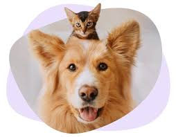 Animal prices themselves do need to be factored into the equation. Pet Health Insurance Health Protection For Your Furry Friends Coya