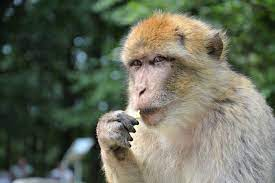 Monkey B Virus: China Reports First Death as Beijing Vet Succumbs to  Infection