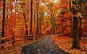 Autumn scenery ...
