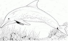 Our coloring pages are easy to print. Coloring Pages For Adults Dolphins Coloring Home